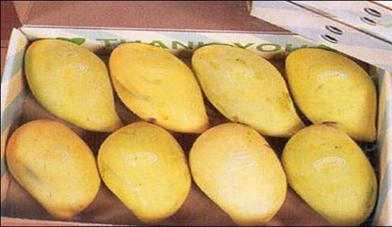 Export Of Mango From Pakistan Kicks Off Today