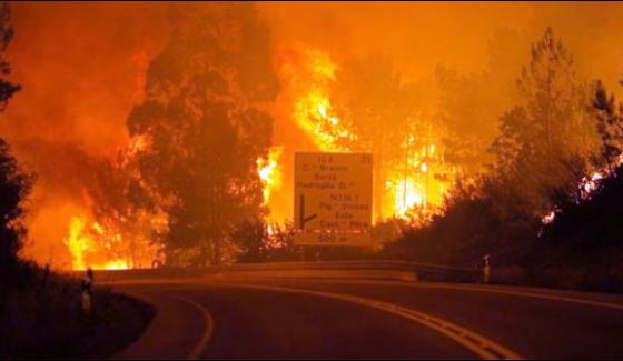 Portugal 25 People Killed In Forest Blaze