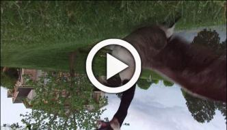 Angry Bird Goose Knocks Hovering Drone