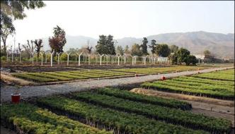 Corruption In Billion Tree Project Disclosed In Kpk