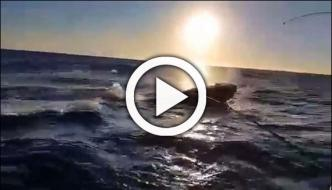 Whale Interrupts Fishing Trip