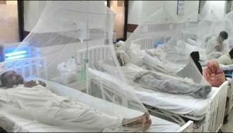 Karachi The Number Of People Affected By Dengue Are 244