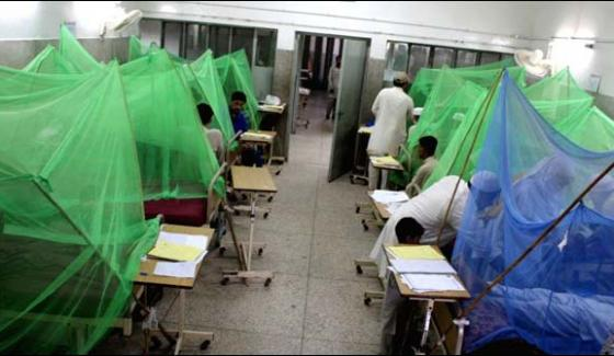 Khyber Pakhtunkhwa Two People More Died Of Dengue Virus