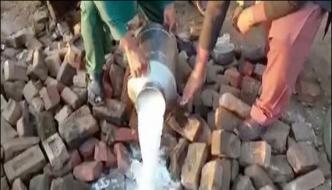 Pfa Disposed Of Harmful Milk In Punjab