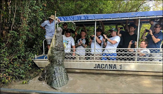 One Of The Largest Crocodile Terrorized Tourists