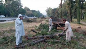 Islamabad Citizens United Against The Harvesting Of Trees