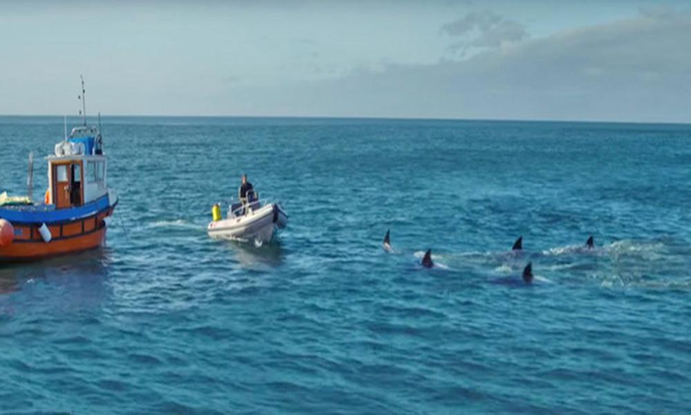 خونخوار شارکس پر مبنی فلم'ڈیپ بلیو سی 2 'کا نیا ٹریلر