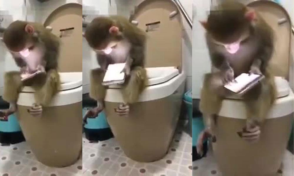 بندر بھی اسمارٹ فون استعمال کرنے لگے