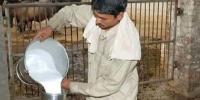 کراچی میں دودھ کے لالے پڑگئے!