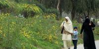 اسلام آباد کی فضاؤں میں پولن کی مقدارخطرناک سطح پر پہنچ گئی