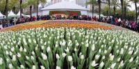 ہانگ کانگ میں ہر سو پھولوں کی بہار چھاگئی