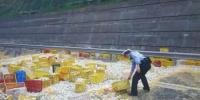چین ، انڈوں سے بھرا بھاری بھرکم ٹرک سڑک پر الٹ گیا