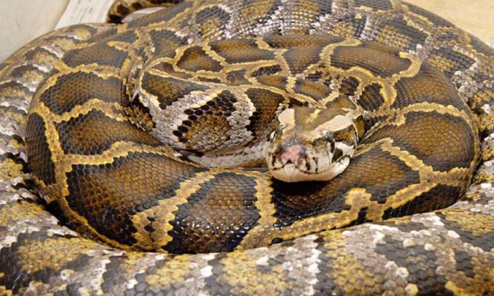 دنیا کے آٹھ بڑے سانپ کہاں ہیں؟