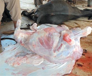 مردہ جانوروں کے گوشت کی فروخت