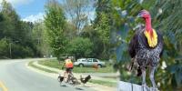 جانور بھی سائیکلنگ کے شوقین نکلے