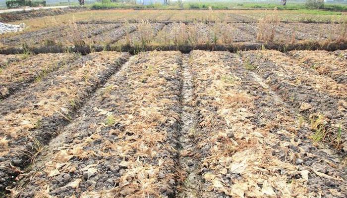 ماحولیاتی تبدیلیاں فصلوں کی غذائیت پر بھی اثر اندازہونے لگیں