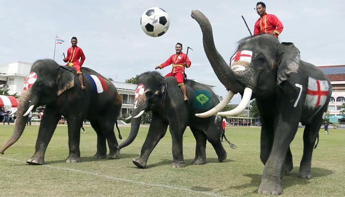 ہاتھی بھی فٹبال ورلڈ کپ کے جنون میں مبتلا