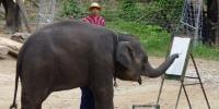 ہاتھی میاں اپنی سونڈ سے کینوس پر رنگ بکھیرنے میں ماہر