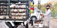 برائیلر مرغی کی قیمتوں میں کمی کا اعلان