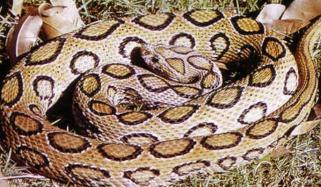 بھارت: اسکول کےکچن سے 60 زہریلے سانپ برآمد