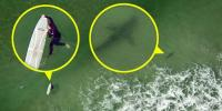 آسٹریلیا کے سمندر میں سرفر شارک کے حملے سے بال بال بچ گیا