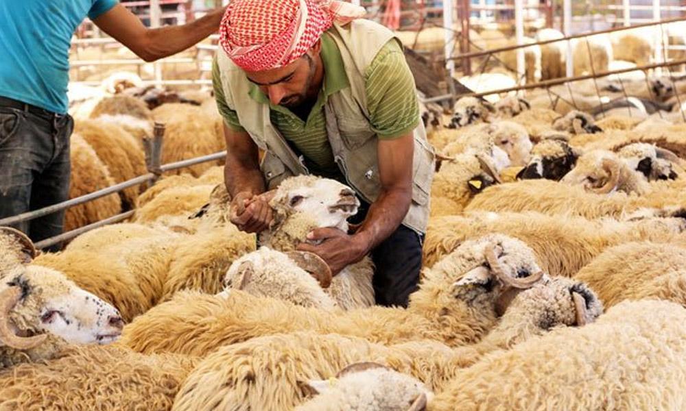 پکچر گیلری: دنیا بھر میں عید الاضحیٰ کے خوبصورت مناظر