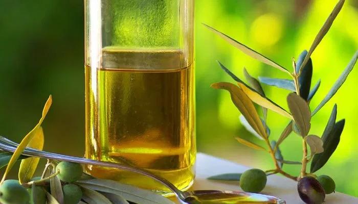 سعودی عرب 30سے زیادہ قسم کے زیتون تیار کرنے میں کامیاب
