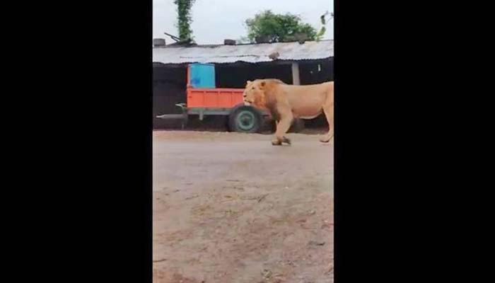 بہادر کتے نے شیر کواُلٹے قدموں بھاگنے پر مجبور کر دیا