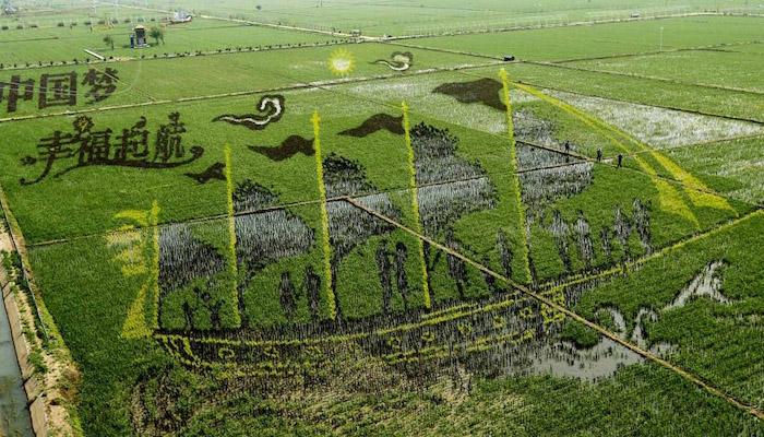 کسانوں نے کھیتوں پر تھری ڈی تصاویر بنا ڈالیں