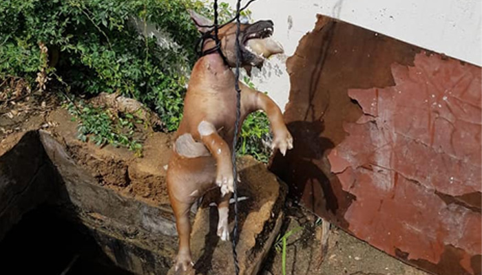 پمپنگ اسٹیشن سے کتے کی لاش برآمد ، سعید غنی کا نوٹس