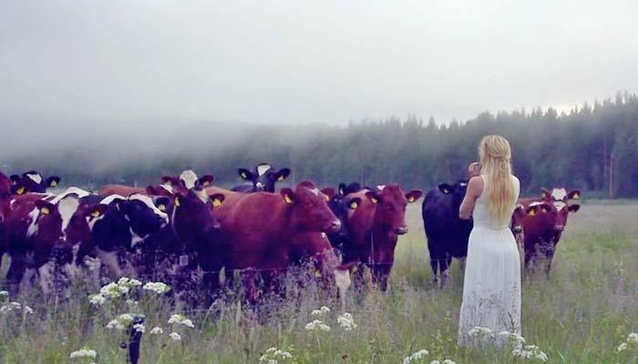 سویڈن میں مویشی موسیقی کی زبان سمجھنے لگے
