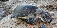گوادرکےساحل پر سمندری حیات کو خطرہ