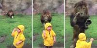 امریکہ : شیر نے تاک لگا کر ننھی بچی پر حملہ کر دیا
