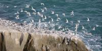 سائبیریا سےموسمی پرندوں کی بلوچستان آمدکاسلسلہ شروع