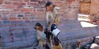 Monkey Who Love Photography