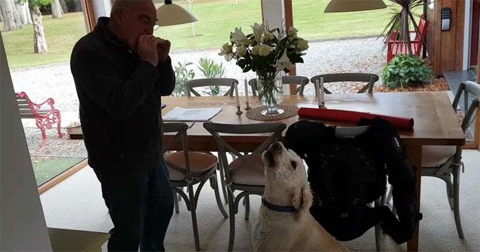 میوزک کی دھن پر گاناگانے والا کتا