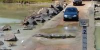 Massive Crocodile Holds Up Traffic