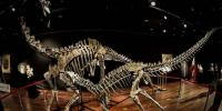 Two Dinosaur Skeletons Up For Auction In Paris