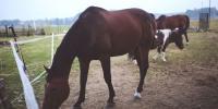 Horse Bites Man Hand In India
