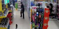 Otter Caught Wandering Around Supermarket