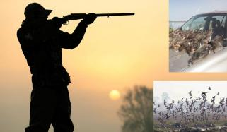 Illegal Hunting Of Winter Birds On Shores Of Chenab River