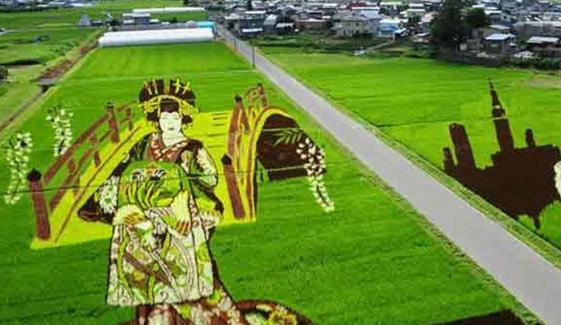 Awesome Rice Paddy Art At Inakadate Japan