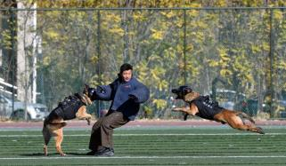 5th National Police Dog Skill Competition Kicked Off