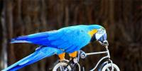 This Parrot Can Skate Shoot Hoops And Even Ride Cycle China