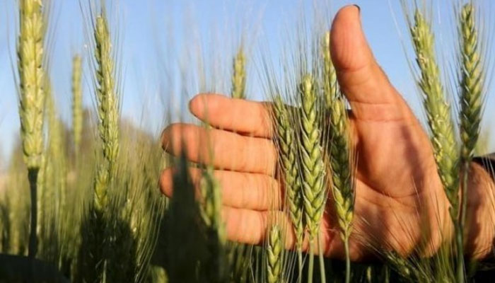 خیبر پختون خوا : 4ارب کی گندم پر 13 ارب سے زائد سود لینے کا انکشاف