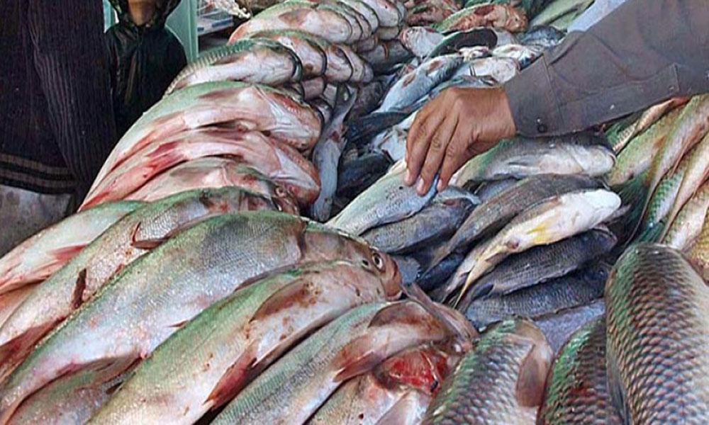 دریائے سندھ کی کس مچھلی کی مانگ بڑھ گئی؟