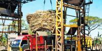 Sugar Mills Association Announces Sugarcane Crushing
