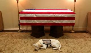 Bush Senior Loyal Dog Viral On Social Media