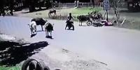 Woman Is Knocked Off Her Motorbike When A Cow Smashes Her With A Flying Spin Kick Paraguay