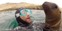 Naughty Seal Become Friend With Diver In Argentina